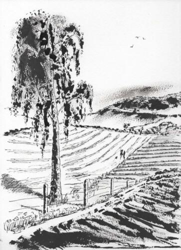 Fields seen from Mitchell's Elm. INK.