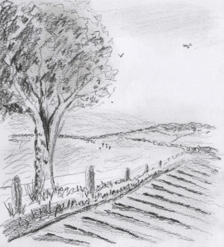 Fields seen from Mitchell's Elm. PENCIL.